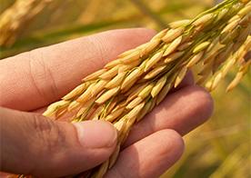 Podsticanje mere u poljoprivredi